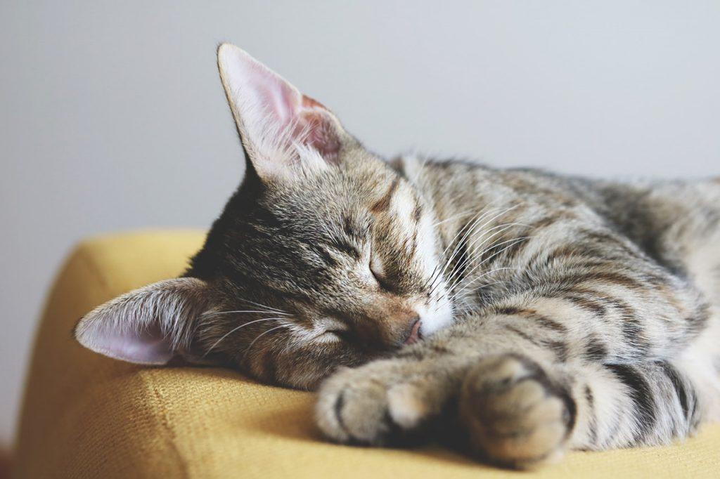 chat endormi sur un canapé jaune
