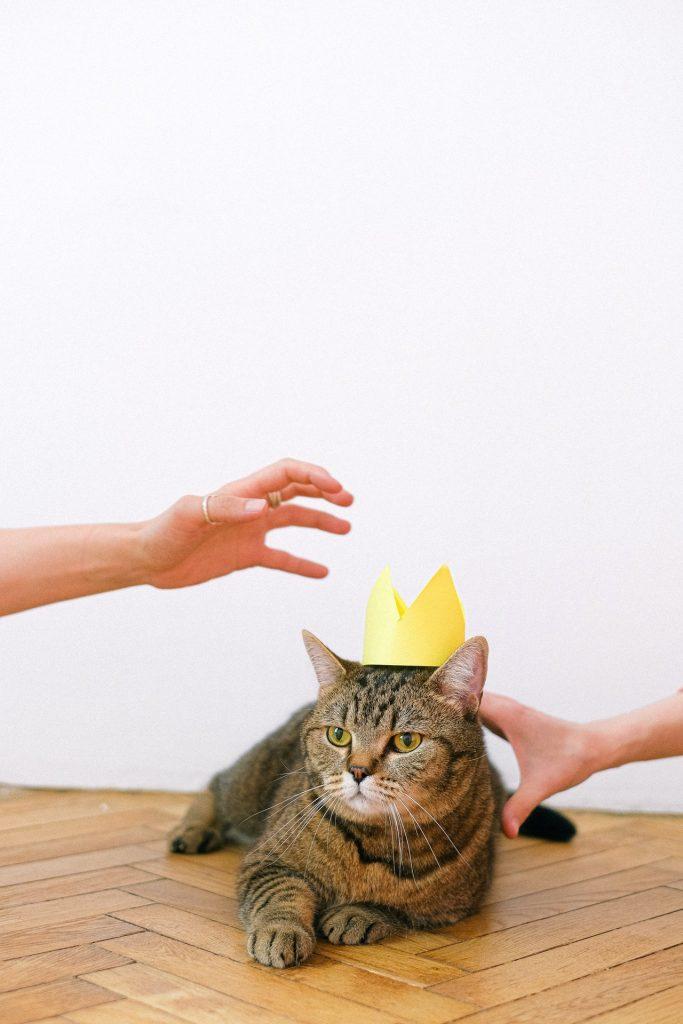 chat tigré avec une couronne en papier sur la tête