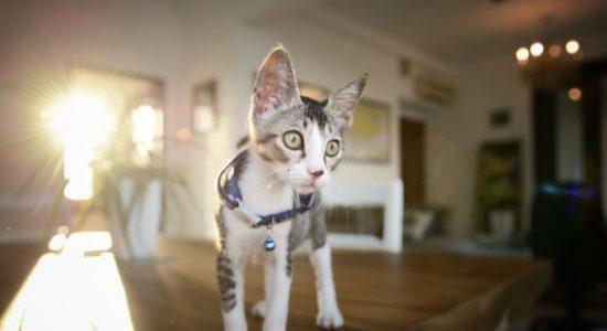 race-de-chat-appartement-choisir-animal-de-compagnie